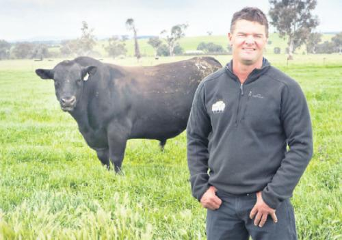 Tim Scott of Table Top Angus said Rivalea's beef feed products have helped them achieve the results they were aiming for.